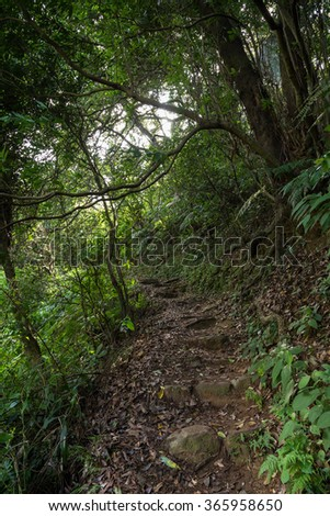 Path in a lush and verdant forest at the New Territories in Hong Kong, China. - stock photo