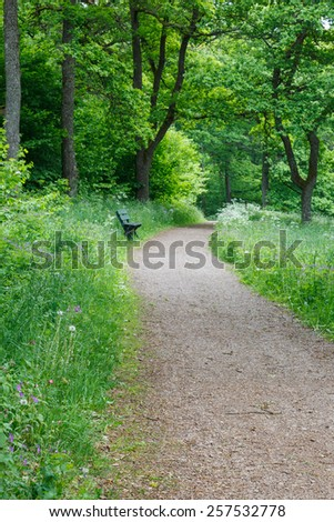 Path in a summer floral meadow in the woods - stock photo