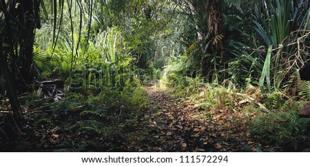 Path in a tropical rainforest - stock photo
