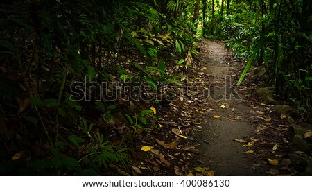 path in a tropical rainforest