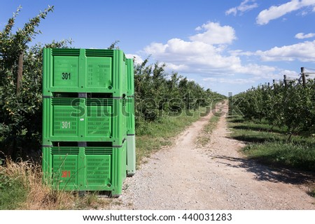 path in an industrial orchard apple with green boxes for harvest