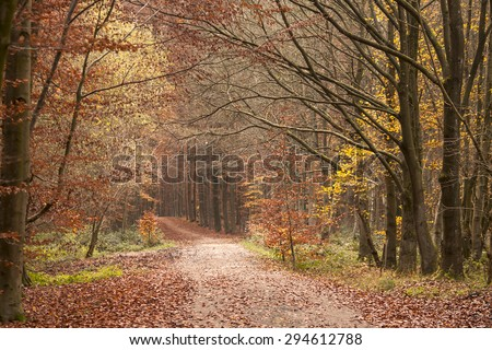 path in autumn forest  - stock photo
