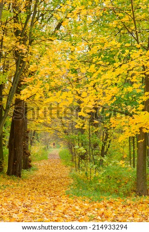 path in autumn park with yellow leaves on ground - stock photo