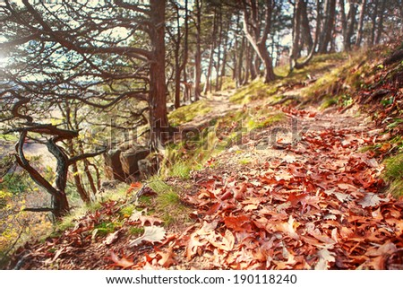 Path in autumn woods - stock photo