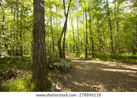 Path in beautiful green forest in summer - stock photo