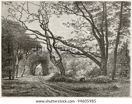 Path in Fontainebleau forest, old view. Created by Desjobert, published on Le Tour du Monde, Paris, 1867 - stock photo