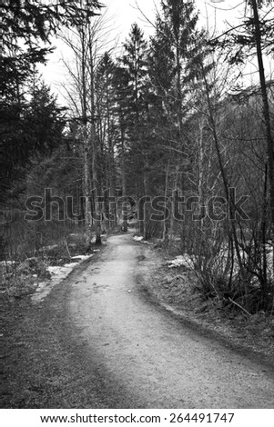 Path in forest in Austria in Black and White