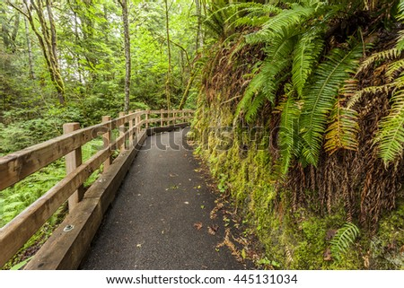 Path in forest leading to Madison Falls, in the Olympic Peninsula of Washington.