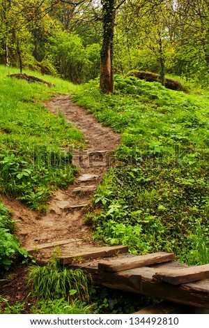 path in green rain forest- spring vertical landscape - stock photo