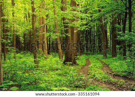 path in green summer forest - stock photo