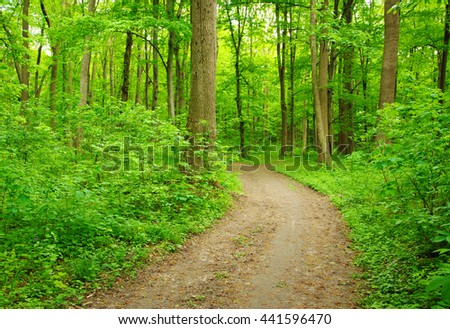 Path in green summer forest