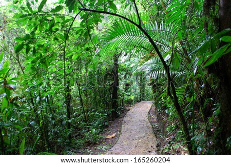 Path in rainforest, Monteverde National Park, Costa Rica  - stock photo