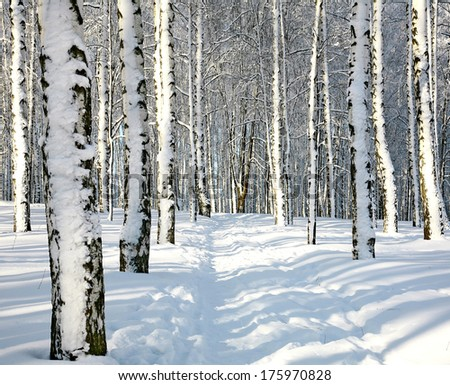 Path in sunny winter forest - stock photo