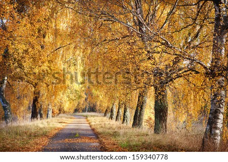 path in the autumn forest - stock photo