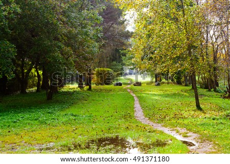 Path in the autumn park. Autumn Landscape. Old Park in Autumn after rain. Path in the forest.