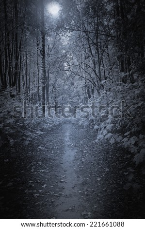 Path in the deep forest at night time. - stock photo