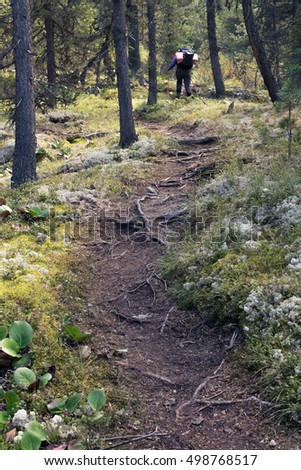 Path in the forest, Altai mountains, Russia