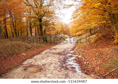 Path in the forest during fall.