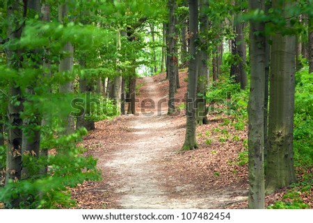 Path in the forest or park - stock photo
