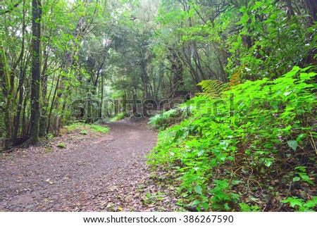 Path in the forest within Garajonay National Park, La Gomera, Spain - stock photo