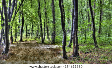Path in the Forest/Woods - stock photo