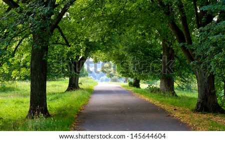 Path in the nature - stock photo