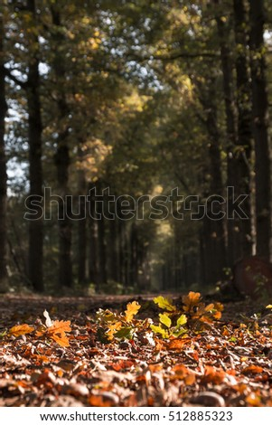 Path in the woods with the focus on the leaves in the foreground. Low perspective with a blurred background. Sunrays through the branches.