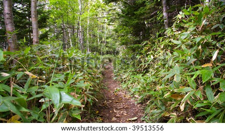 Path in  to taiga. Island Kunashir,Kurily