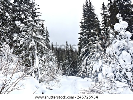 Path in winter fir-tree forest. Fantastic snow figures on trees. - stock photo