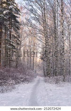 Path in winter forest - stock photo