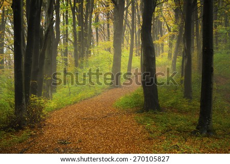 Path into foggy forest