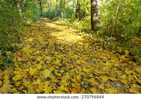 Path is in the autumn forest. - stock photo