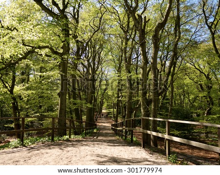 Path leading down in forest - stock photo
