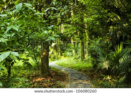 Path leading into the forest