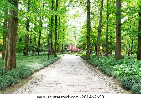 Path leading through forest on a sunny late afternoon. - stock photo