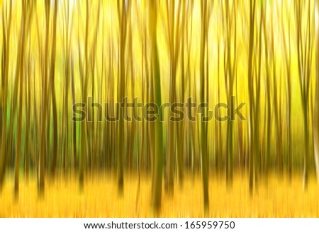 Path leading through the autumn forest. - stock photo