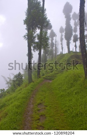 Path leading to mist, Sikkim, India