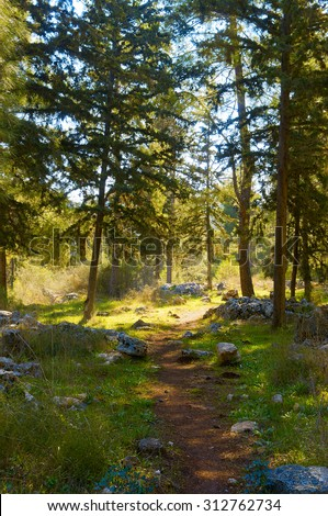 path leading to the clearing in the pine forest near the rocks and trails in the trees - stock photo