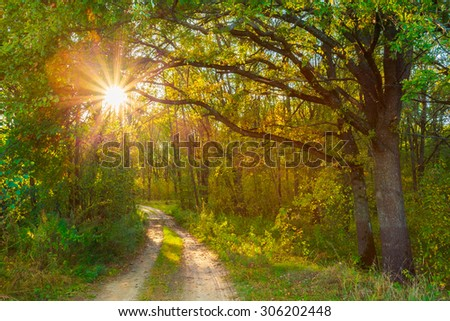 Path Road Way Pathway On Sunny Day In Autumn Sunny Forest Trees, Green Grass. Nature Wood Sunlight Background. Instant Toned Image - stock photo