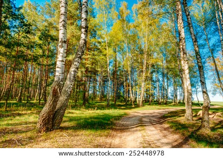 Path Road Way Pathway With Trees On Sunny Day In Summer Forest. - stock photo
