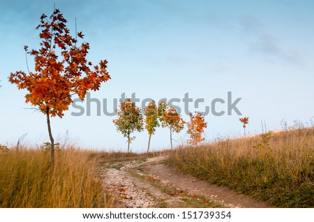 Path, single maple