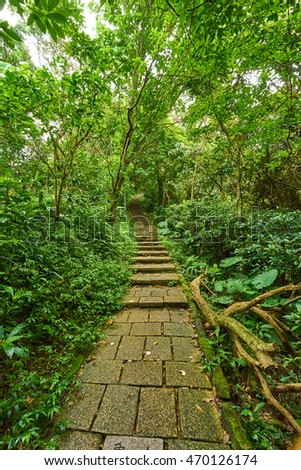 Path Stairs in the jungle, Taipei