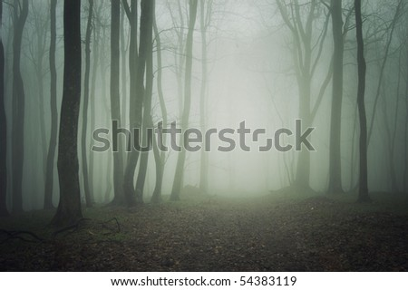 path through a dark forest with fog - stock photo