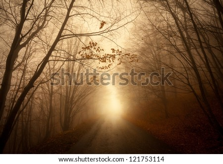 path through a fall forest - stock photo