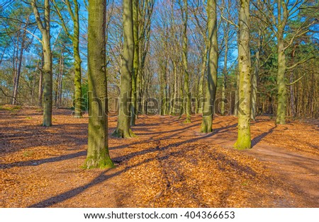 Path through a forest in spring