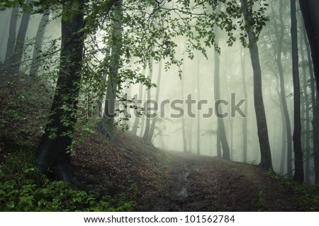 path through a green forest in summer - stock photo