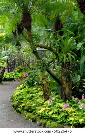 Path through a lush tropical garden on the Big Island of Hawaii has wild orchids, ferns and palm trees. - stock photo