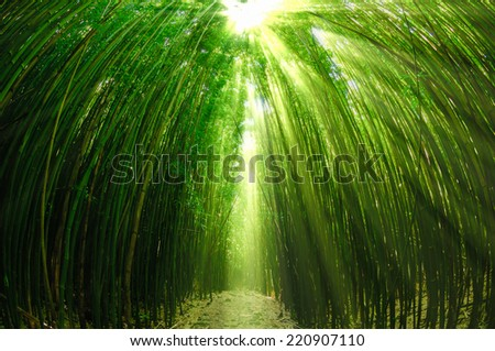 Path through a tall bamboo forrest on the Road to Hana on Maui, Hawaii, USA - stock photo