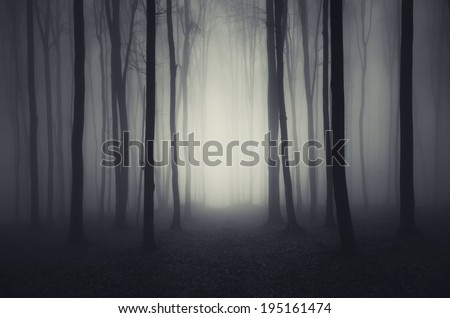 path through an ethereal forest - stock photo