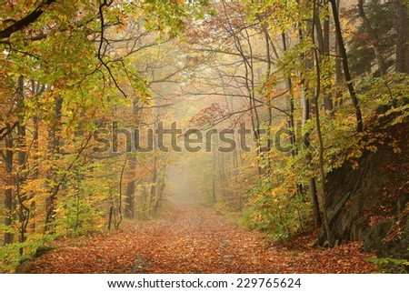 Path through autumn forest on a foggy, rainy day. - stock photo